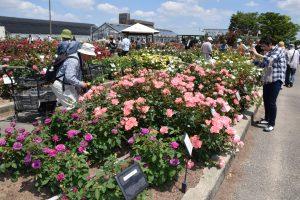 バラ園は毎年5月には満開となり、多くの来場者が訪れる