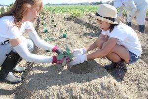 親子協力して野菜苗を植える