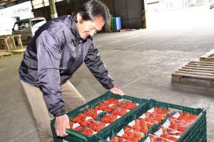 朝摘みイチゴを出荷する堀内浩幸さん