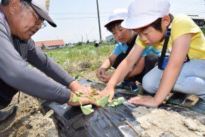 農業塾生とともにイモつるを植える児童ら