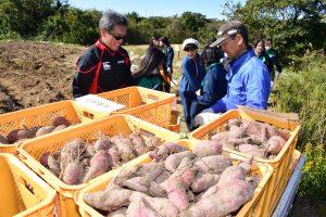 軽トラック一杯にサツマイモを積み込む参加者ら