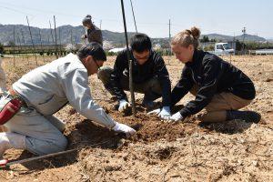 開講式・イチジク苗木の植え付け実習(4月)