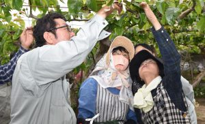 摘果する果実を確認する参加者ら