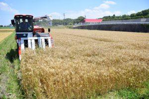 麦の収穫風景