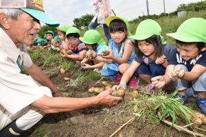 市川先生(左)と一緒に嬉しそうに収穫する福地北部保育園の園児ら