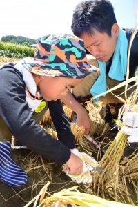 稲作青年部の農家が見守る中ではさみで稲を収穫する子ども