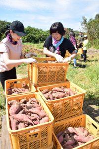 収穫したサツマイモを運ぶ学生ら