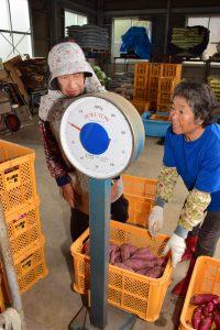 佐久島店でサツマイモの計量を行う農家