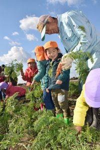 園児とともに人参を収穫するにしお農業塾の市川徹男先生(右)