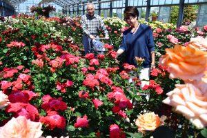 温室のバラを楽しむ来園者